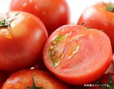 静岡・長野県産 アメーラトマトの画像