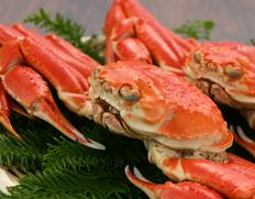 ずわい蟹1杯(500g)の画像