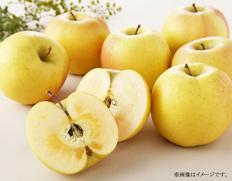 青森県産黄色いりんご「こうこう」【2021年12月中にお届け】の画像